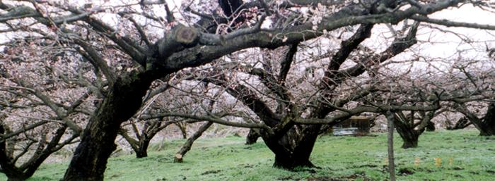 森梅園風景