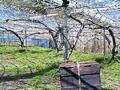 ミツバチの巣箱設置